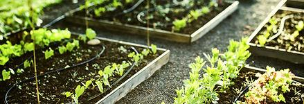 Raised beds garden chichester