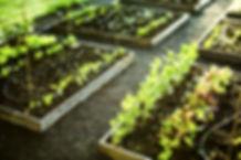 Upper Beaconsfield Community Garden Group