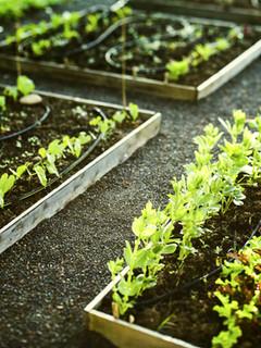 Our Fresh Produce Garden
