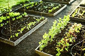 Topsoil in raised garden bed