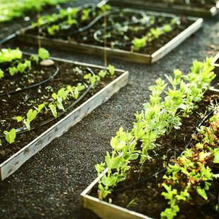 Grow your own fruit & veg