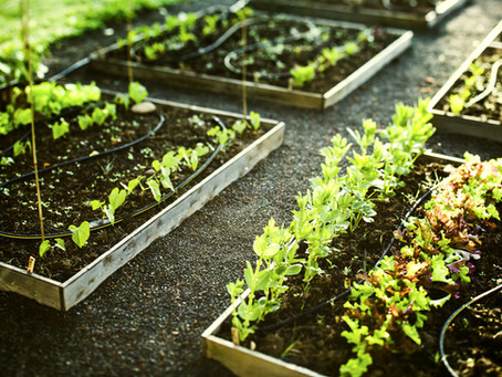Farm to table. Benefits of Urban Farming.