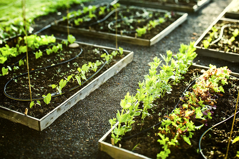 3 Gardening Tips to Help Improve Your Life