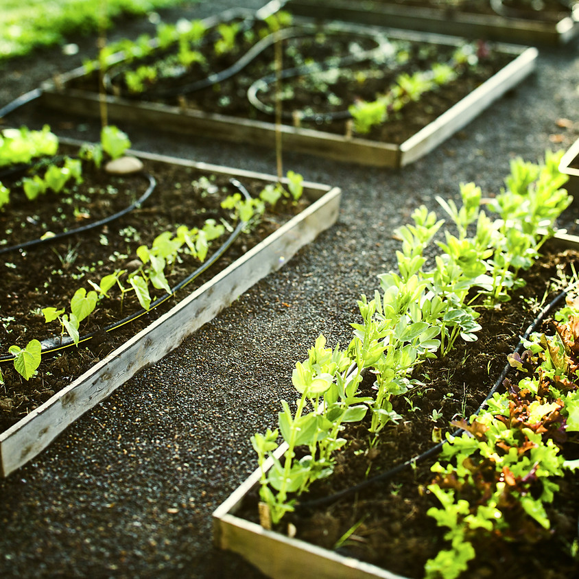 Produce, Provide, Protect: How to Become More Food Independent: Feed & Treat your Growing Garden