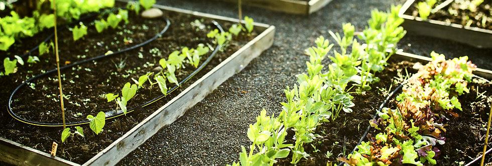 WHLS Enhanced Carbon Rich Living Garden Blend