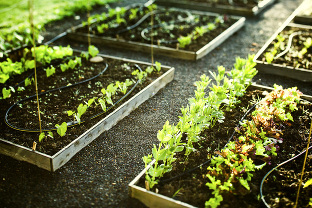 How to Save 'Hundreds of Dollars' Growing Your Own Food, According to Good Housekeeping