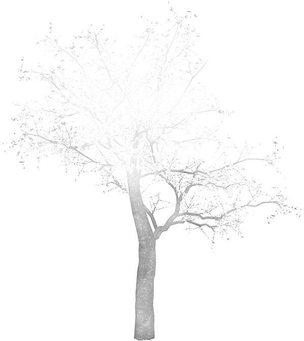 TREE OPAQUE.jpg
