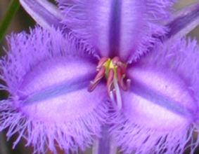 Byron Naturopath - Flower Essences