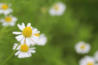 Byron Naturopath - Aromatherapy