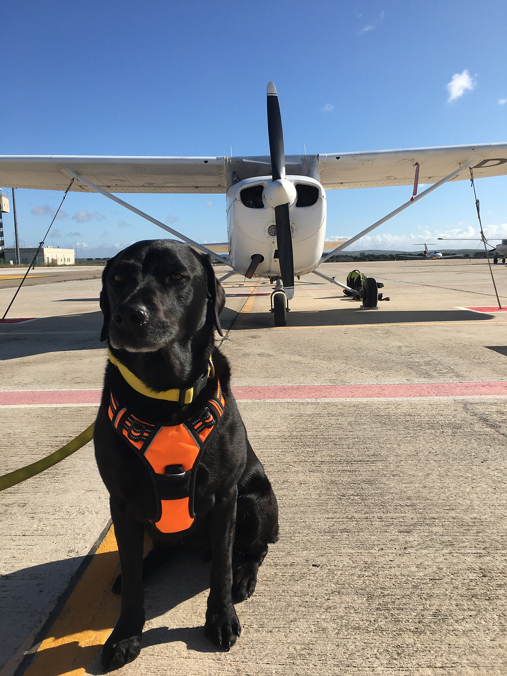 Percy the black labrador goes flying in a Cessna 172 at Fly In Spain at Jerez International Airport