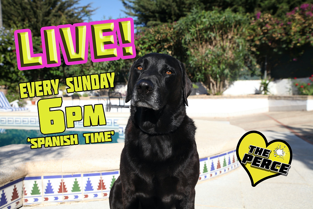 Percy the Labrador will be live on YouTube every Sunday at 6pm Spanish time. He will be answering Questions and taking suggestions for future videos and more...