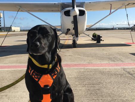 Percy the Labrador flies around Spain