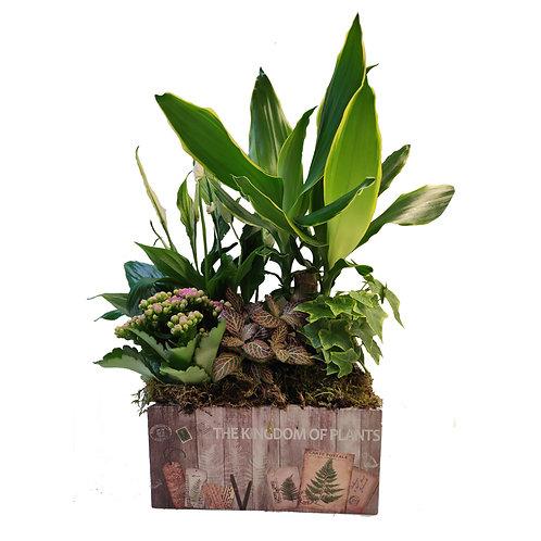 CAJON THE KINGDOM OF PLANTS