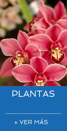 INICIO PLANTAS.jpg