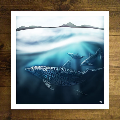 Coastal Dolphin (Trade Price)
