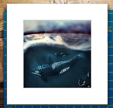 Orca Pod Mounted Giclee Print
