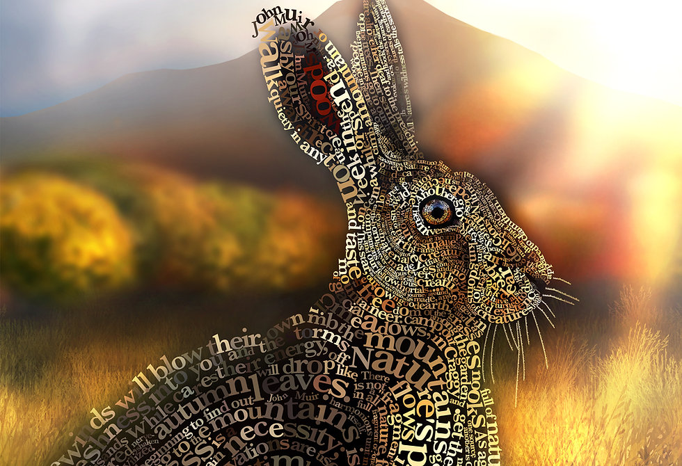 hare website.jpg