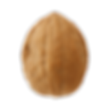 Walnut-Free-Download-PNG[1].png
