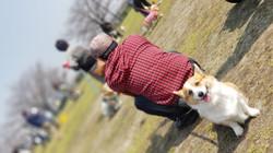 愛犬(エマ♀)