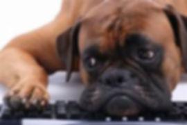 unhappy dog.jpg
