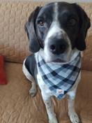 Does this bandana make my nose look big?