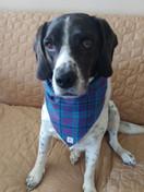 Serious about my new bandana