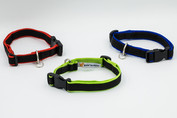 "3/4"" collars in red, green and blue"