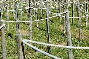 rope maze.jpg