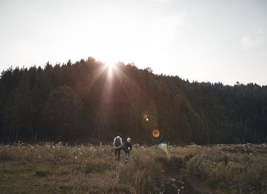 Solnedgang over skoven