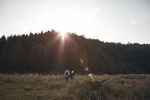 Solnedgång över skogen