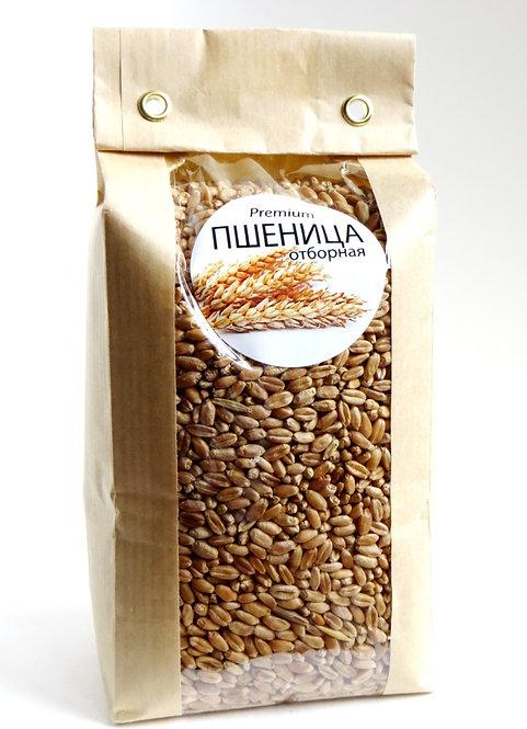 Зерно Пшеницы отборной 500г