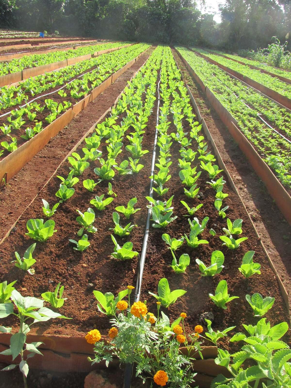 cuba_2016_659__organic_gardening_vivero_alimar