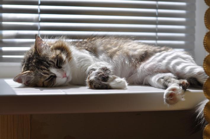 Beautiful Fluffy Cat