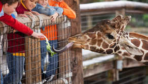 Zoos - Conservation Or Cruelty