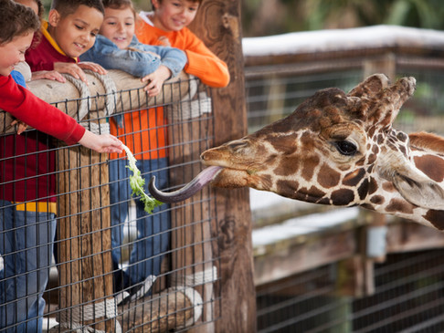 How interacting with animals makes children more sociable