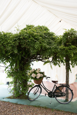 5 Horseshoes Bike and wisteria