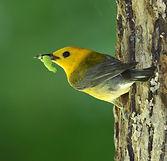 bird worm.jpg