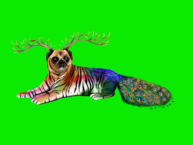 Pet 1