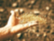 semer_edited.jpg