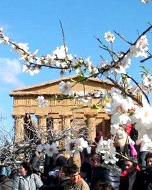 Almond-tree-fest-in-Agrigento.jpg