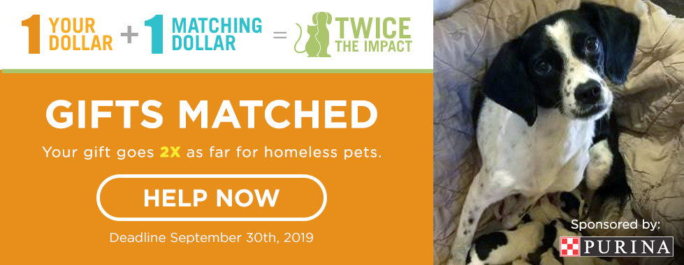 Adopt a Dog or Cat, HALO Animal Rescue, Phoenix, AZ