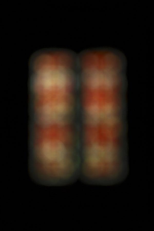 capsule_XIV.jpg