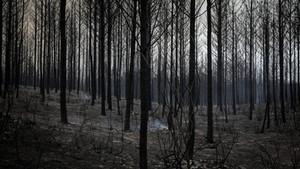 A nossa Floresta