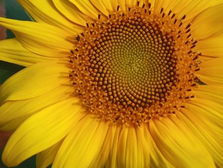 Understanding The Spiral Nature Of Healing