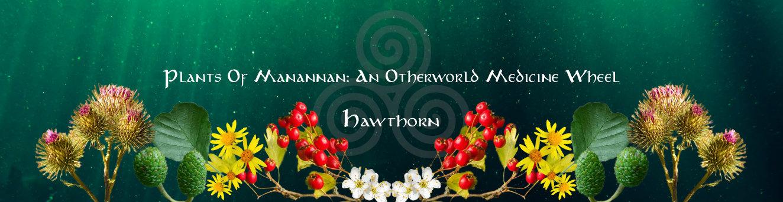 Hawthorn-Website-Header6.jpg