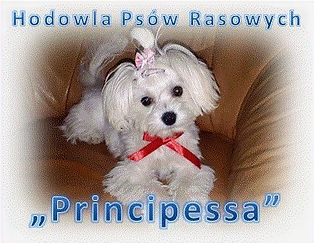 Principessa_edited.jpg