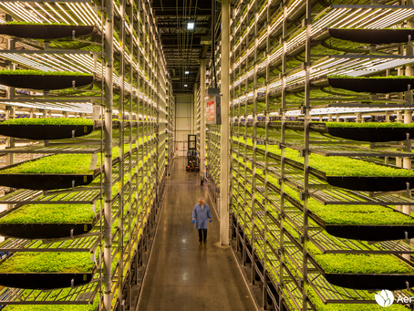 Vertical Farming & Sustainability