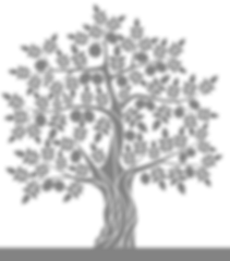 png transparent background_tree.png