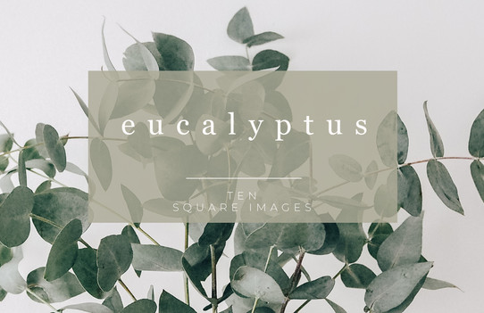 Eucalyptus-Stock-images.jpg