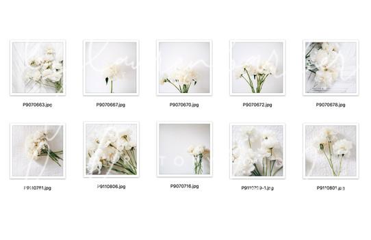 Photo-Bundle-collection.jpg